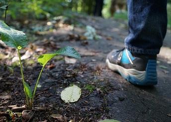 Walk, shoe, plant