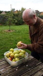 Elderly man looking at pears